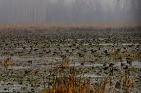 Wetland Destruction, Illegal Encroachments Triggering Kashmir Floods